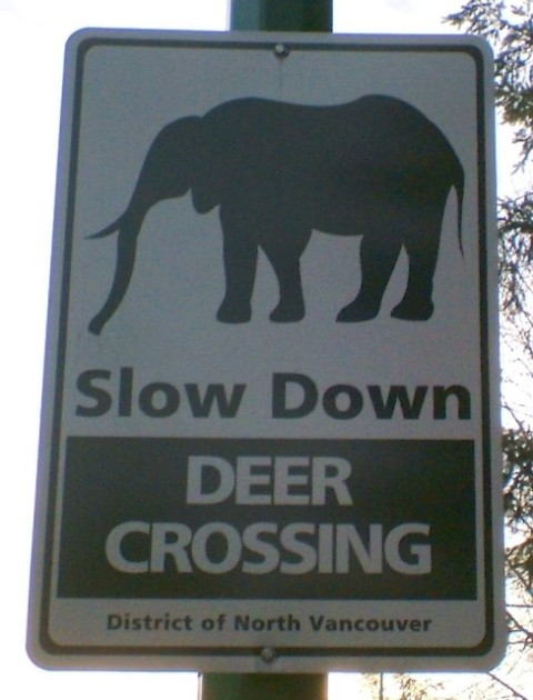Elephant Crossing-small