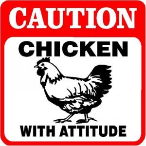 ChickenAttitude-300x300