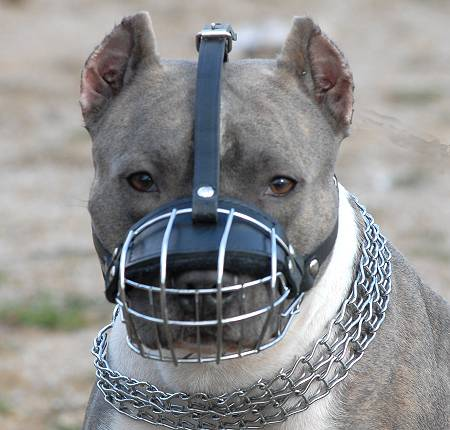Pitbull-muzzle-wire